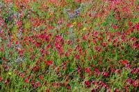 Fleurs-ville-Marguerittes-Gard-Photo-Pro